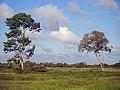 Paisaje al Sur del Estado Monagas.jpg