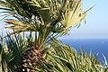 Palos Verdes (4005513237) (2).jpg