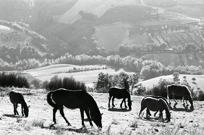 File:Paolo Monti - Servizio fotografico (Italia, 1981) - BEIC 6354209.jpg