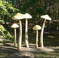 Park grzybowy w Pilce (Marasmius oreades).JPG