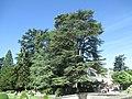 Park of the Château de Chenonceau (5).jpg