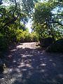 Parque Nacional 7 Tazas, Región Del Maule, Chile - panoramio (2).jpg