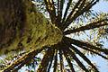 Parque Nacional de Aparados da Serra 01.jpg