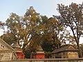 Pashupatinath Temple IMG 1496 32.jpg