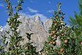 Passu Cones and apples.jpg