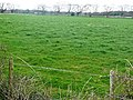 Pasture north of Thorns Lane - geograph.org.uk - 757459.jpg