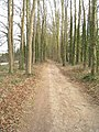 Path through the trees - geograph.org.uk - 1746907.jpg
