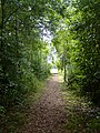 Path through the trees - geograph.org.uk - 925829.jpg
