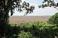 Payne's Prairie - panoramio.jpg