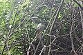 Pequeno pássaro.jpg