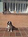 Perro y gato tomando sol.jpg