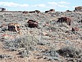 Petrified Forest National Park-2.jpg