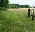 Pferdekoppel bei Knittelsheim - panoramio (1).jpg