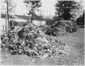 Photograph of Clothes That Belonged to Prisoners of the Dachau Concentration Camp - NARA - 531288.tif