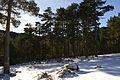 Picos de Urbión Picos de Urbión DSC 7098 (11550750324).jpg