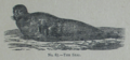 Picture Natural History - No 87 - The Seal.png