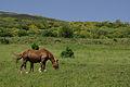 Piedrafita de la Mediana 14 by-dpc.jpg