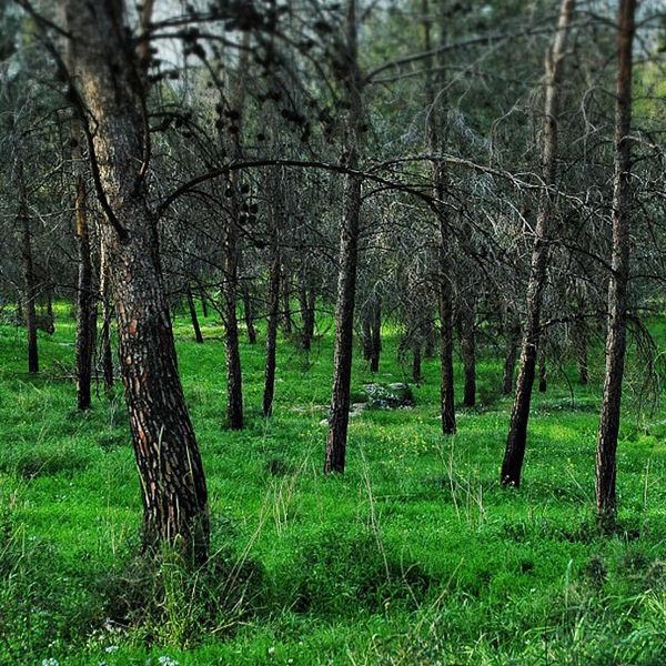 היער הירוק