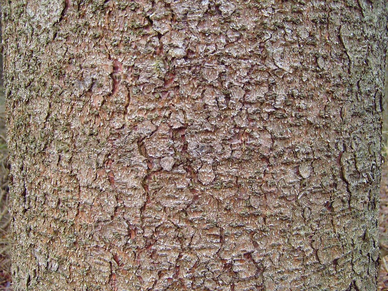 how to draw tree bark texture