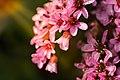 Pink flower cluster 1 (Unsplash).jpg