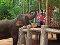 Pinnawala Elephant Orphanage 2012 - panoramio (6).jpg