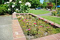 Planter with roses in bloom at Eastman Memorial Rose Garden - Hillsboro, Oregon.JPG