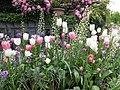 Plants of Tivoli Gardens 2018 06.jpg