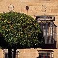 Plasencia - naranjo.jpg
