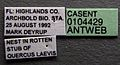 Platythyrea punctata casent0104429 label 1.jpg
