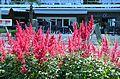 Poertschach Johannes-Brahms-Promenade Blumenbeet vor Parkhotel 27062013 724.jpg