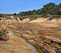 Point Lobos 20 at 04-07-2010.jpg