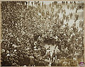 Police protect Nick Altrock from adoring crowd, 1906 World Series.jpg