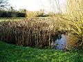Pond in Boies Meadow - geograph.org.uk - 1165099.jpg