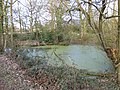 Pond near Garway Common - geograph.org.uk - 1181110.jpg