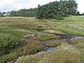 Poniel Water at the track to Coalburn - geograph.org.uk - 259014.jpg