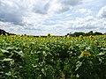 Pope Farm Conservancy - panoramio - Corey Coyle (11).jpg