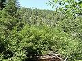 Porcupine Canyon - panoramio.jpg