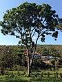 Posse, Teresópolis - RJ, Brazil - panoramio (23).jpg