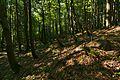 Prírodná rezervácia Jedlinka, CHKO Vihorlat.jpg