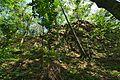 Prírodná rezervácia Jedlinka, CHKO Vihorlat (04).jpg