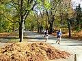 Praha, Bubeneč, Stromovka, běh.jpg