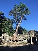 Preah Khan 3.jpg