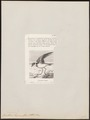 Procellaria tropica - 1842-1849 - Print - Iconographia Zoologica - Special Collections University of Amsterdam - UBA01 IZ17900062.tif