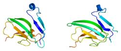 Protein ACVR2A PDB 1bte.png