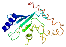 Protein CDC34 PDB 2ob4.png