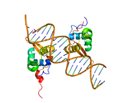 Protein FOXM1 PDB 3G73.png
