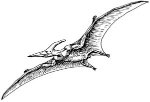Line art drawing of Pteranodon.
