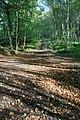 Public Bridleway, East Arnecliffe Wood - geograph.org.uk - 571547.jpg