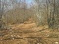 Put prema rijeci - panoramio (1).jpg
