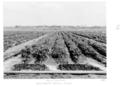 Queensland State Archives 4297 Field Irrigation Bureau of Investigation Pastures Gatton 1950.png